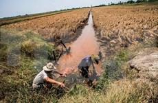 11 provinces announce drought, saltwater intrusion emergency