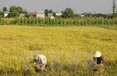 Over 3.76 million ha of land suggested be zoned for rice farming