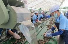 Cashew prices reach highest in a decade