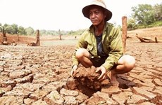 Central Highlands struggle with drought