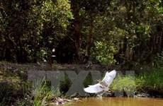 Rare animals found in U Minh Ha national park