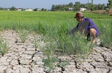 Adaptation to saltwater intrusion critical to Mekong Delta