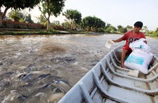 Tra fish production shifts towards sustainable supply chain