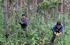 JICA-funded project to help develop sustainable forest in northwest