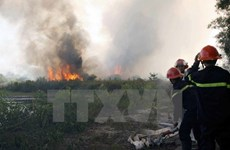 Dong Thap on full alert for forest fires