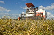 Japan to open rice processing firm in Yen Bai