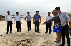 Authorities investigate mass fish kills in coastal provinces