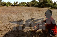 Ca Mau supports farmers in drought-hit areas