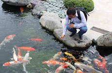 HCM City eyes 50 million USD in ornamental fish exports