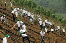 Honda plants 80 hectares of forest in Bac Kan