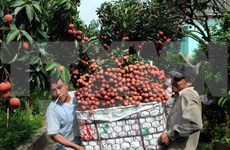 Bac Giang seeks to boost lychee consumption