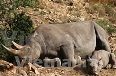 Vietnam toughens up fight against illegal wildlife trade
