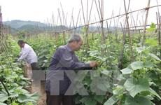 Lam Dong serves up hi-tech agricultural model