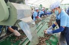 Vietnam to import 450,000 tonnes of raw cashew nut