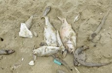 Marine pollution at alarming rate off Vietnam's coast