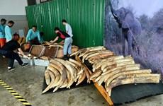 Singapore destroys tusks worth 9 million USD