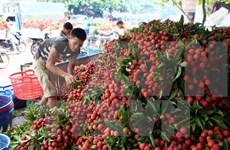 Fruit export surges in first five months