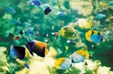 HCM City: Ornamental fish exports bring home 7 million USD