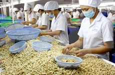Cashew industry to establish fund