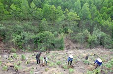 Dak Lak works to reclaim illegally occupied forest land