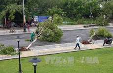 Central localities urged to overcome storm consequences