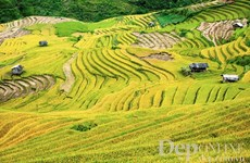 Cultural week of Mu Cang Chai terraced field opens