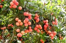 Fruit-vegetable export surpasses rice export