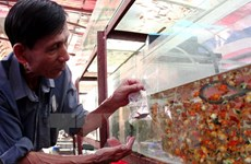 HCM City looks to expand ornamental fish industry