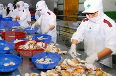 Farming bivalve molluscs for export favourable in Vietnam