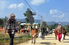 Vietnamese, Lao localities forge stronger collaboration