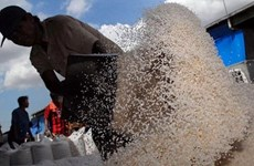 Indonesia forecasts possible rice shortages next year