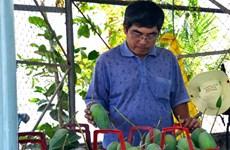 Japan helps boost Dong Nai's mangoes export