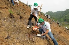 Forest sector receives funds