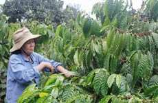 Coffee sector aims to increase added value