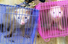 Tay Ninh customs save smuggled wild animals