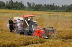 Farmers called to devote greater efforts to national development