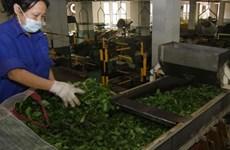Vietnamese tea exports decrease