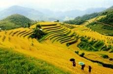 National week honours Mu Cang Chai terraced paddy fields