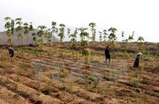 Forest protection encouraged to be included in poverty reduction