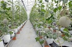 Cuba, HCM City share agricultural development experience