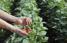 Promising market for soymilk industry