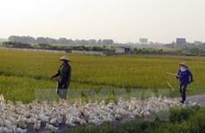 A/H5N6 avian flu virus found in Nam Dinh
