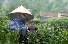 Tea festival attracts international participants