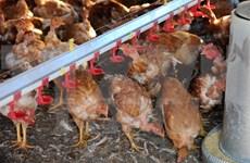 Vietnam vigilant over A/H7N9 avian influenza