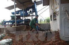 Laos: Coffee exports continue to fall
