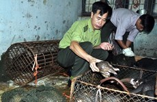 Hung Yen discovers smuggling case of pangolins