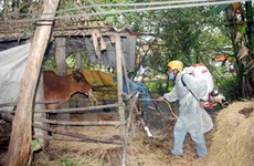 Ministry to boost cattle foot-and-mouth immunity