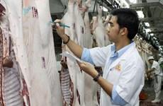 Vissan IPO attracts 142 investors
