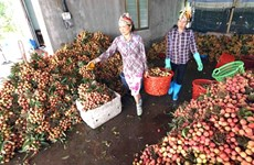 Irradiation facilities benefit fruit exporters