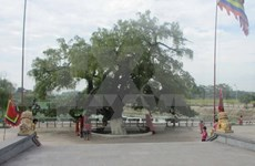 Heritage title given to centuries-old tree in Vinh Phuc